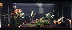 My first aquarium!!