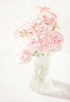 Carnations are not only cost effective, but they are the longest lasting flower once in bloom.