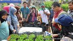 Peserta perhorti melihat proses perbenihan yang dipandu oleh Kusnan kepala kebun KP Punten