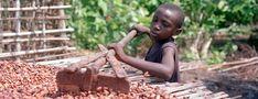 Afrique - Des enfants esclaves pour produire notre chocolat