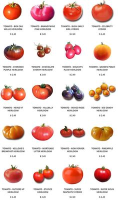 We carry seeds for many Heirloom Tomatoes including Brandywine, Cherokee Purple, Cherry, Pineapple, and Indigo Rose. Our Heirloom Tomatoes are open-pollinated. Growing Tomatoes From Seed, Growing Tomatoes In Containers, Growing Vegetables, Fruits And Veggies, Grow Tomatoes, Types Of Tomatoes, Roasted Tomatoes, Cherry Tomatoes, Heirloom Tomato Seeds