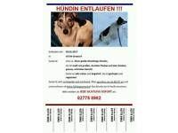 Vermisst! Hessen - Driedorf Vorschau