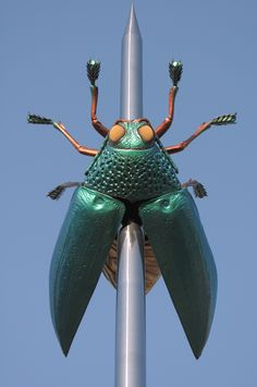 scarab from Jan Fabre