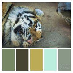 tiger color pallet