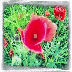 Poppy - Follow me on http://urlin.it/2e070
