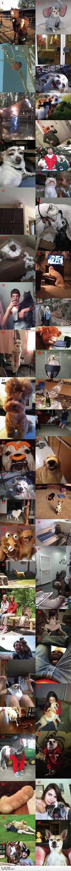 Die lustigsten Tierbilder aus 2012