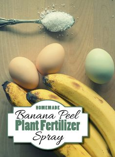 Banana Peel Plant Fertilizer Spray for your plants and your garden from Little House Living