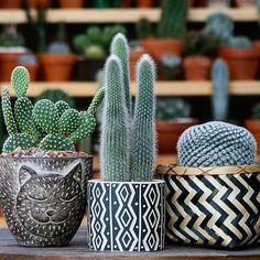 Black and white print cactus planters Cactus Care, Cactus Flower, Flower Pots, Succulent Terrarium, Cacti And Succulents, Planting Succulents, Cactus Planta, Cactus Y Suculentas, Deco Cactus