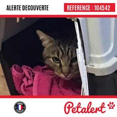 27.01.2017 / Chat / Trappes / Yvelines / France