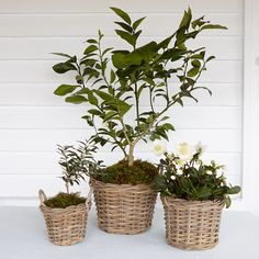 Check out this Rattan Basket Planter from Terrain. I am eyeing the larger one!! Check out this and more at www.theoaktreeny.com