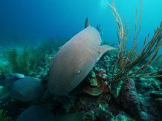 Photo - Google Photos Belize Diving, Pets, Google, Animals, Animales, Animaux, Animal, Animais, Animals And Pets