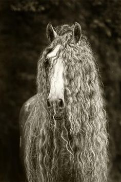 .Not fair why does the horse get curly hair & I don't?!  Beautiful horse though!