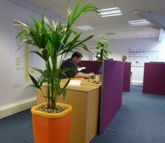 Interior landscaping in Tetbury, a case study. Office Plants and one Companys commitment to Sustainability