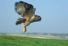 Erstflug in Freiheit