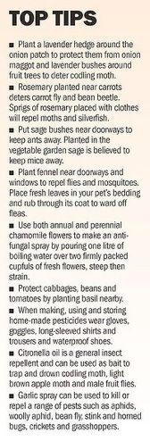Companion gardening tips