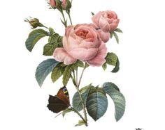vintage flower bouquet illustration - Sök på Google