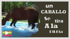 VideoViral:Un caballo se tira a la pileta--http://bit.ly/1RMk1XT