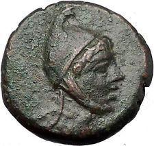 AMISOS in PONTUS MITHRADATES VI the GREAT Time Perseus Pegasus Greek Coin i55443 https://trustedmedievalcoins.wordpress.com/2016/05/11/amisos-in-pontus-mithradates-vi-the-great-time-perseus-pegasus-greek-coin-i55443/