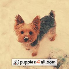 Learn more about your puppy! Click here: http://puppies4all.com/ #dog #cute #puppy