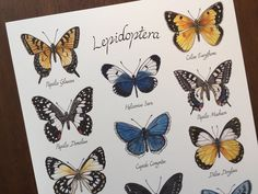 Butterfly Art print // Creatures of Lepidoptera // Butterfly Scientific Illustration Butterfly Painting, Butterfly Art, Types Of Butterflies, Plant Illustration, Gouache, Creatures, Colours, Illustrations, Art Prints