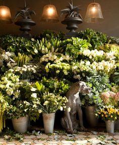Catleya, a beautiful flower shop in Brussels .