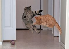 anti-gravity training at the hogwarts school for cats.