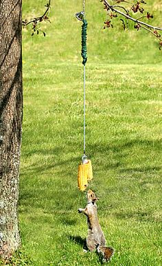 bungee jumping squirrel feeder - my dad would get a KICK out of this Squirrel Feeder Diy, Bird Feeders, Bungee Jumping, Cool Pets, Wild Birds, Bird Watching, Yard Art, Bird Houses, The Great Outdoors