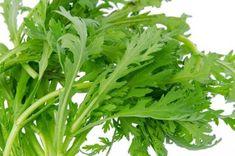jedlá chryzantéma - listy Sashimi, Herbs, Beautiful, Health, Garden, Instagram, Future, Party, Pretty Pictures
