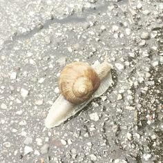Snail, Animals, Animales, Animaux, Animal, Animais, Slug