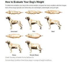 How to Safely Help Your Overweight Dog Lose Weight - Fidose of Reality