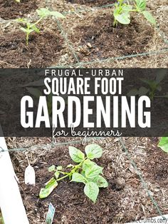 "There was no real goal to last year's garden, other than to ""plant some stuff and see what happens."" This year though, I have a game plan and it includes facing the challenges of gardening head on… with you along for the ride.Our first challenge:  My gardening space is limited.Possible solution:  Urban square foot gardening. #gardening #urbangarden #gardeningtips #urbangardeningtips #gardeningforbeginners Vegetable Garden For Beginners, Gardening For Beginners, Gardening Tips, Flower Gardening, Succulent Gardening, Magic Garden, Diy Garden, Garden Ideas, Edible Garden"