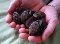 Image result for baby bunnies cute