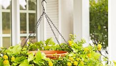 Lowes.com offers a step-by-step guide to creating your very own handing birdbath planter at home.