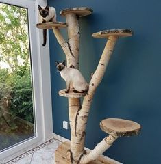 Outdoor cat tree can be a lovely and pleasing addition to your cat's life! Try these 15 best DIY outdoor cat tree ideas & plans to build your own cat tree. Cat Playground, Playground Design, Animal Room, Outdoor Cat Tree, Diy Cat Tree, Cool Cat Trees, Best Cat Tree, Cat Towers, Cat Shelves