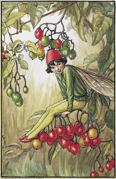 Nightshade Berry Fairy	   																										Author / Illustrator  								Cicely Mary Barker
