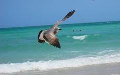 florida beaches   ... Island and Visit Pristine White Sandy Beaches with Abundant Shelling