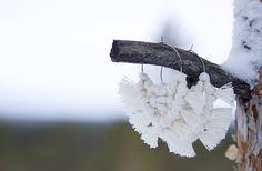 """3 tykkäystä, 0 kommenttia - Tiia Korhonen, Ekotar design (@ekotardesign) Instagramissa: """"Pohjola - korvakorut on valmistettu kierrätetystä puuvillasta ☝️ ja jotta kaikki voisi nauttia…"""" Dandelion, Flowers, Plants, Design, Instagram, Jewelry, Jewlery, Jewerly, Dandelions"""