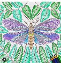 Millie Marotta's Tropical World - Moth