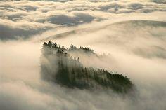 Redwoods in fog, Monterey Bay, California, by #Frans_Lanting