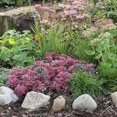 Perenner att lyckas med för dig som är grön i trädgården! - perenner.se Garden Inspiration, Garden Plants, Succulents, Nature, September, Gardening, Google, Plants, Naturaleza