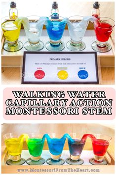 Capillary Action Montessori STEM kids science experiment for preschoolers and kindergarteners! Join the membership! Homeschool Montessori MADE EASY Color Activities For Toddlers, Nanny Activities, Science For Toddlers, Science Experiments For Preschoolers, Preschool Colors, Preschool Learning Activities, Classroom Activities, Toddler Activities, Preschool Science