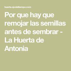 Por que hay que remojar las semillas antes de sembrar - La Huerta de Antonia