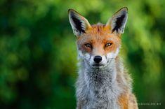 British Wildlife | David Lloyd Wildlife Photography