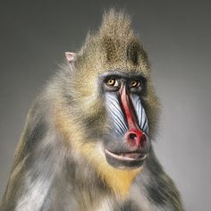 More than human photography- Tim Flach  #photography #professional #skill #amazing #animal