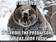 Prednisone Bear is not happy! I'm glad the deflation begins as soon as you get off of it! I'M NOT FAT! IT'S FROM THE PREDNISONE! I'LL EAT YOUR FACE!