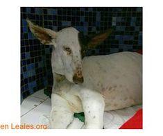 Leales.org  Blogs April 17 2018 at 04:18PM    Míralo aquí: http://lealesorg.blogspot.com/2018/04/contacto-y-info-httpbit.html #Difunde en #LealesOrg y #adopta para #AdoptaNoCompres O un #SeBusca de #perro o #gatos; #perdido o #encontrado   Contacto y Info: http://bit.ly/2H5ITuY #Difunde en #LealesOrg y #adopta para #AdoptaNoCompres O un #SeBusca de #perro o #gatos; #perdido o #encontrado ℹ   Acerca de esta publicación:  Esta publicación NO ha sido creada por Leales.org y NO somos…