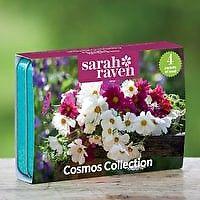Sarah Raven Cosmos Seed Tin Collection