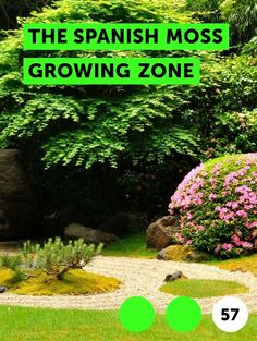 Kinds Of Cactus Plants Shrubs Kinds of cactus plants - - - - cactus plants in Yew Shrub, Best Grass Seed, Lady Banks Rose, Kinds Of Cactus, Small Cactus, Pieris Japonica, Growing Grass, Growing Flowers, Growing Herbs