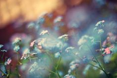 spring watercolours by Laura Williams on 500px