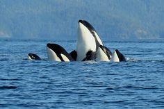 Great family portrait!  Port McNeill, British Columbia, Canada